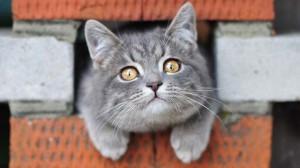 Кот смотрит внимательно