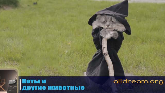 Коты и другие животные - кот-волшебник