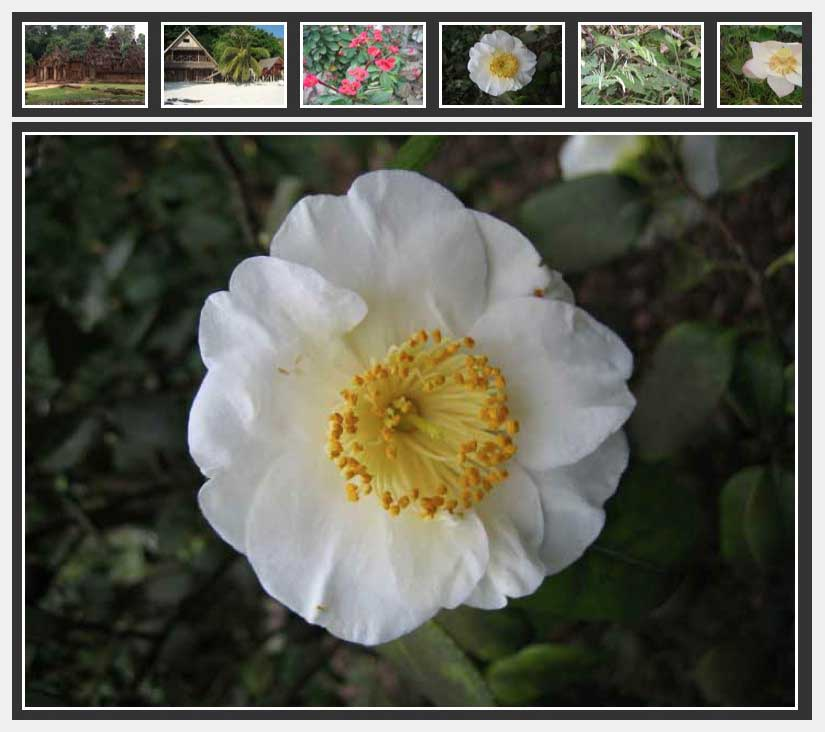 NextGEN Scroll Gallery для Wordpress
