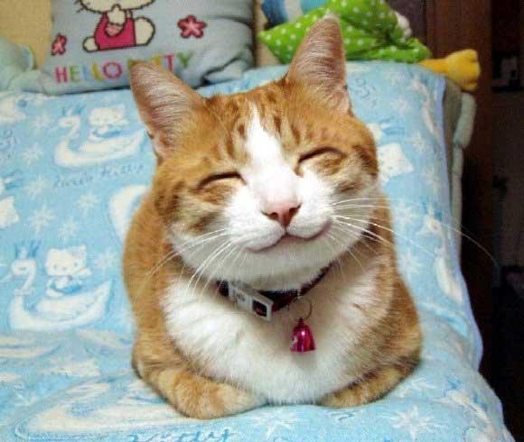 коты веселые фото